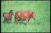 马和鹿0140,马和鹿,动物,