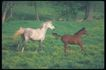 马和鹿0141,马和鹿,动物,