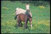马和鹿0144,马和鹿,动物,