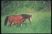 马和鹿0147,马和鹿,动物,