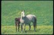 马和鹿0149,马和鹿,动物,