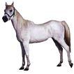 马和鹿0152,马和鹿,动物,白马