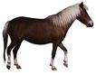 马和鹿0156,马和鹿,动物,白色马鬃