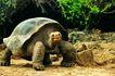 龟0007,龟,动物,