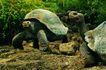 龟0010,龟,动物,