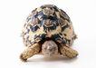 龟0033,龟,动物,