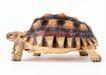 龟0034,龟,动物,