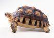 龟0036,龟,动物,