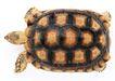 龟0038,龟,动物,
