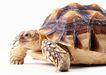 龟0039,龟,动物,