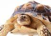 龟0040,龟,动物,
