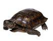 龟0045,龟,动物,