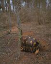 龟0046,龟,动物,