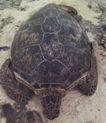 龟0052,龟,动物,