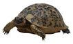 龟0053,龟,动物,