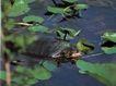 龟0055,龟,动物,