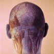 医疗与解剖0066,医疗与解剖,医疗,后脑