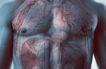 医疗与解剖0072,医疗与解剖,医疗,胸部