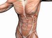 肌肉人体模型0064,肌肉人体模型,医疗,