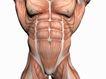 肌肉人体模型0073,肌肉人体模型,医疗,