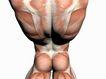 肌肉人体模型0074,肌肉人体模型,医疗,