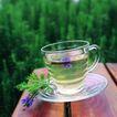 花草茶饮0053,花草茶饮,饮食,一杯淡茶