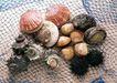 上盘海鲜0189,上盘海鲜,水果食品,