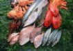 上盘海鲜0197,上盘海鲜,水果食品,
