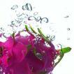 动感水流0043,动感水流,水果食品,