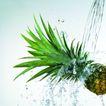 动感水流0078,动感水流,水果食品,