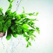 动感蔬菜0026,动感蔬菜,水果食品,