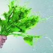 动感蔬菜0045,动感蔬菜,水果食品,