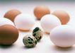 新鲜肉品蛋0178,新鲜肉品蛋,水果食品,