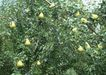 水果果实0152,水果果实,水果食品,