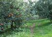 水果果实0156,水果果实,水果食品,
