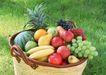 水果果实0158,水果果实,水果食品,