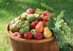 水果果实0159,水果果实,水果食品,