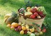 水果果实0161,水果果实,水果食品,