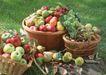 水果果实0162,水果果实,水果食品,