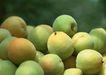 水果果实0167,水果果实,水果食品,