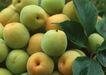 水果果实0168,水果果实,水果食品,
