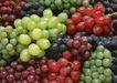 水果果实0175,水果果实,水果食品,