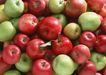 水果果实0176,水果果实,水果食品,