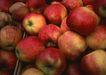 水果果实0177,水果果实,水果食品,