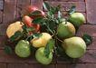 水果果实0190,水果果实,水果食品,