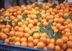 水果果实0199,水果果实,水果食品,