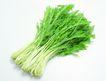 生鲜牛鱼猪鸡蔬菜0146,生鲜牛鱼猪鸡蔬菜,水果食品,