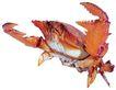 食材海鲜0047,食材海鲜,水果食品,