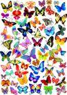 其他0005,其他,欧美花纹元素,彩蝶 蝴蝶 昆虫