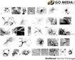 各类图案0026,各类图案,欧美花纹元素,植物图案 黑白图案